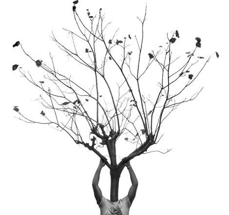 l'homme, l'arbre-agence Saori